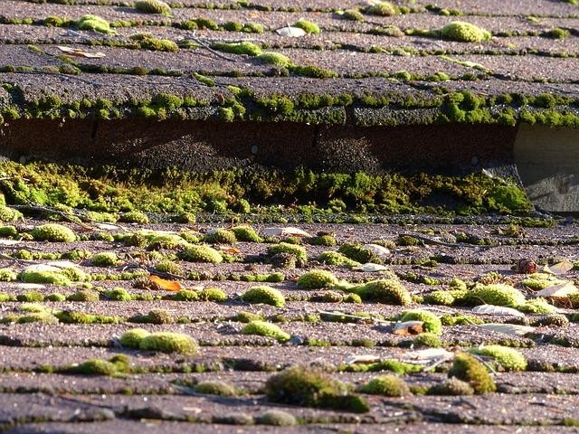 La mousse est l'ennemie de votre toiture : le nettoyage de toiture par IsolToit vous donnera une solution