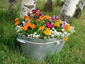 flowers-16814_1280