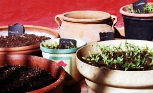aromatic-plants-130414_1280