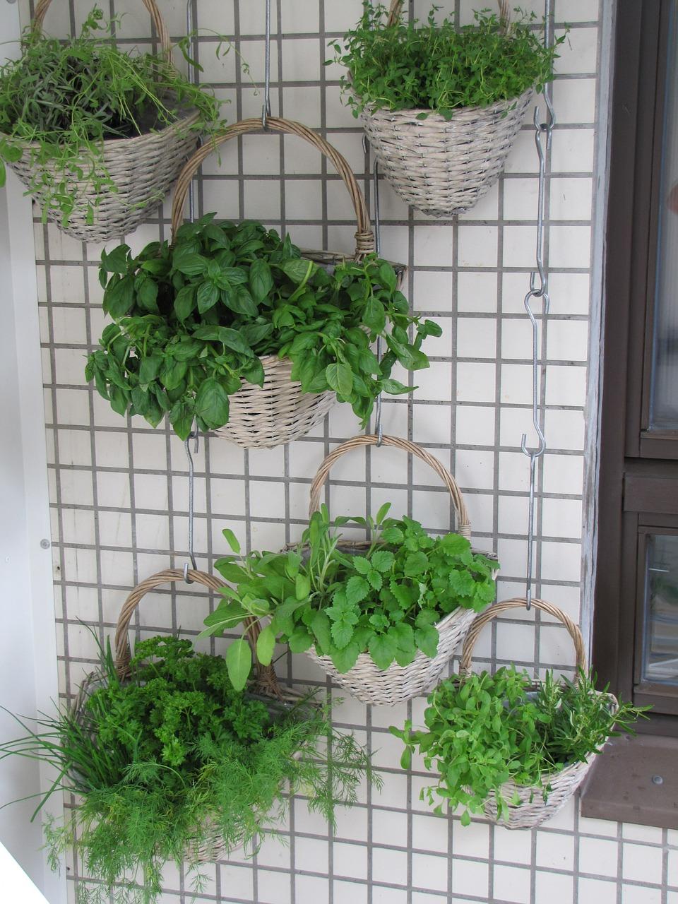 Des plantes suspendues pour d corer votre int rieur d co - Comment decorer sa salle de bain ...